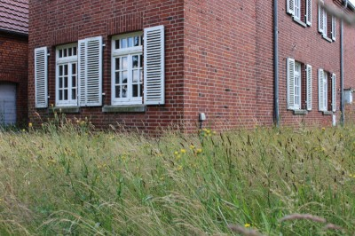 Das hüfthohe Gras...