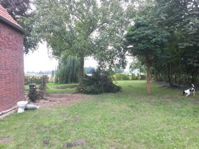 Mehr Luft im Garten. Einer der Nadelbäume zerstörte die Fassade... und musste deshab weichen.